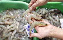 China detecta coronavirus en cargamento de camarones ecuatorianos