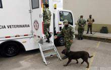 Colombia recibe 6 ambulancias para atender perros que participan en desminado