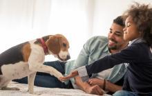 La empatía y el respeto hacia los demás son algunos de los valores que el niño aprende con una mascota.
