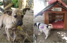 En el Día Mundial del Perro, albergue de animales pide ayuda