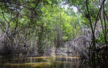Las amenazas que ponen en riesgo nuestros manglares