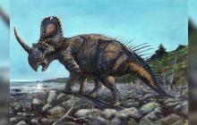 Aspecto del Centrosaurus apertus.