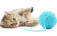 Desde el 2002, cada 8 de agosto se  celebra el Día Internacional del Gato.