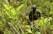 Cuatro heridos por ataque de disidencias de las Farc a erradicadores de coca
