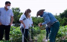 En Atlántico, 700 agricultores sustituirán sus cultivos