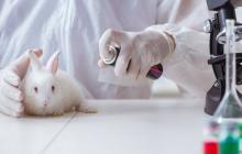 El testeo con animales en pruebas cosméticas los expone a productos tóxicos que les resultan muy dolorosos.