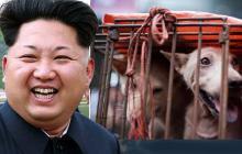 Corea del Norte estaría confiscando perros y vendiéndolos a restaurantes