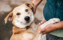 Si se adopta un perro o un gato se debe estar preparado para cuidar de ellos entre 10 y 15 años.