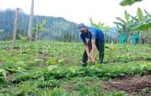 Productores de maíz, frijol y arroz recibirán semillas biofortificadas