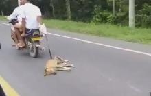 En video   Caen los dos hombres en moto que arrastraron un perro en Bolívar