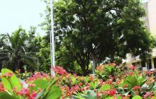 Especies como cedros, robles y acacias son las que más prevalecen en este sector, ubicado en el norte de Barranquilla.