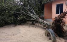 Vendaval también afectó casas en Sabanagrande