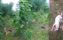 Con estas fotografías la Policía busca a los caninos.