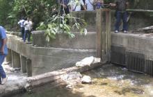 Bebé de 11 meses muere ahogada en una quebrada de Aguachica