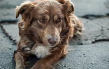 Los perros son los animales de compañía que más sufren por este accionar.