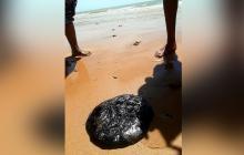 Investigan manchas negras en el mar de la Alta Guajira