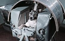 El viaje de Laika, un vuelo sin retorno