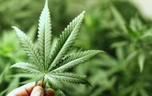 El arduo debate que hundió la marihuana recreativa para adultos