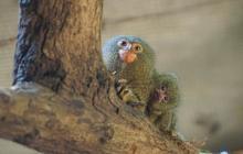 Cuatro nuevos nacimientos alegran el Zoológico de Barranquilla