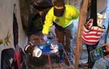 En video | Capturan cuatro personas en una 'Narco-gallera' en Santo Tomás
