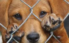 Imputan cargos a cinco personas por ataques a perros