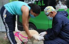 Distrito retoma jornadas de esterilización de caninos y felinos