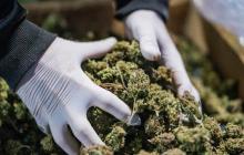 ONU retira el cannabis de la categoría de drogas peligrosas