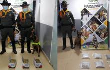Canino 'África' detecta 5 kilos de marihuana prensada