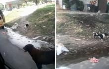 ¡Indignante! Perros fueron abandonados en plena vía pública