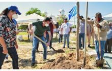 Con la siembra de un árbol comenzó obra en Plaza de Soledad