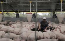 Un productor del sector porcicultor.