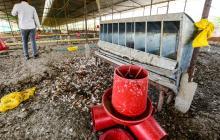El problema que 'pusieron' las gallinas de Repelón