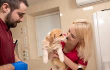 La esterilización consiste en una cirugía para extraer los órganos reproductores de los animales.