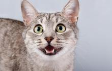 Personas resultaron contagiadas de Covid en fiesta de cumpleaños de un gato