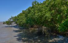 Comunidad de La Playa, expectante por la construcción de megavivero
