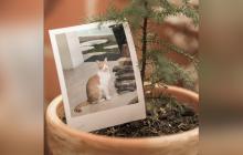 Restos de mascota en una maceta con una planta.