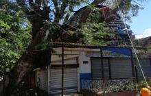 'La Loca' derribó un árbol en El Rodadero