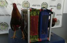 Policía suspende peleas de gallos en Lorica