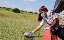 Liberan especies silvestres en la ciénaga de Ayapel, sur de Córdoba