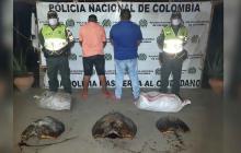 Traficantes ilegales sacrificaron una tortuga de 200 años de vida