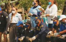 Corpamag libera 106 tortugas marinas rescatadas en el 2020