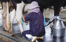 Adicionar lactosuero a la leche afecta al consumidor: Andi