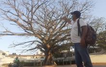 Emblemática bonga de Santa Marta está enferma y tratan de salvarla