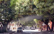 En Barranquilla hay un árbol por cada dos habitantes