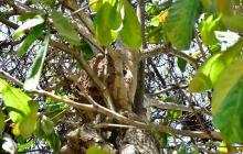 Árboles enfermos preocupan a los barranquilleros