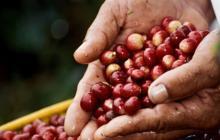 Colombia espera producir 6 millones de sacos de café en el primer semestre