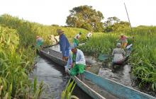 Buscan recuperar ecosistemas en el medio y bajo Magdalena