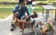Se recupera cuidador de los perros de Lady Gaga que fue herido