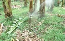 Corpamag y bananeros firman agenda ambiental para el buen uso del agua