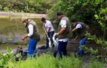 Siembran 180 mangles rojos en complejo lagunar de Santa Marta